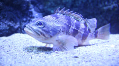 Fish under water Stock Footage
