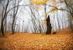 Autumn in a forest Stock Photos