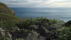 Atlantic Ocean and Fynbos, Cape Town Stock Footage