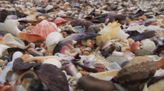 Static shot of mussel, wellk, limpet shells on a beach Stock Footage