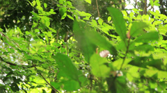 Spider appears on his web. Phuket, near Kathu waterfall. Stock Footage