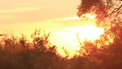 Beautiful Sunset driving through Trees Stock Footage