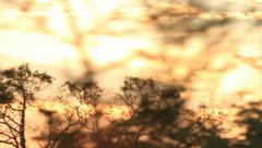 Motion shot at Sunset driving through Trees Stock Footage