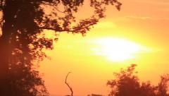 Spectacular Sunset driving through Trees in Africa Stock Footage