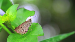 Butterfly and ant Stock Footage
