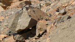 Group of barbary ground squirrel 11179 Stock Footage