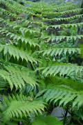 Green gardens - stock photo