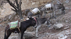 Saddled donkeys patiently waiting for tourists in Lindos, Greece. Stock Footage
