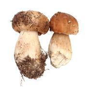 Two fresh fungi porcini Stock Photos