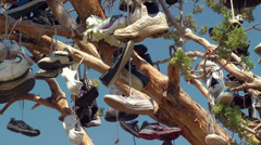 Tree full of Shoes Stock Footage