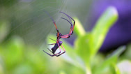 Stock Video Footage of Palm spider after the rain. Seychelles 2013