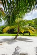 Palm tree on a tropical white sand seychelles - stock photo