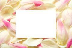 Blossom leaves frame Stock Photos