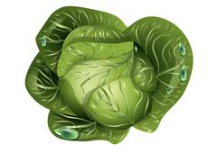 Cabbage with drops of water Stock Illustration