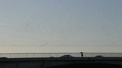 Thousands of starlings fly 7 Stock Footage