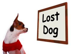 Lost dog sign showing missing or runaway puppy Stock Photos