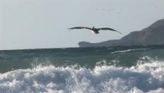 Pelican flys low over the sunlit ocean Stock Footage