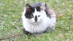 Stray cat - stock footage