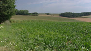Pan Swiss chard field in rolling countryside in South Limburg, the Netherlands Stock Footage