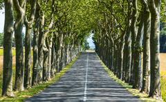 road near carcassonne (france) - stock photo