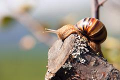 Snail climbs to the top of the branches Stock Photos