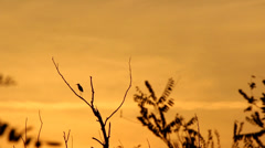 Sunset and silhouette of the bird - stock footage
