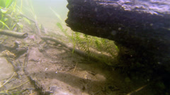 An underwater view of the lake floor with plants and some broken sticks Stock Footage