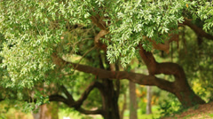 Green branches in a wood Stock Footage