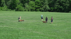 Dogs playing in a field (6 of 6) Stock Footage