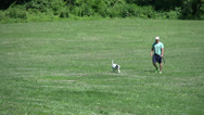 Stock Video Footage of Dogs playing in a field (4 of 6)