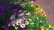 Stock Video Footage of Colorful, alluring Flowers