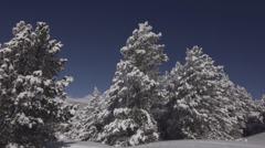 TREES_FULL_OF_SNOW_SLIDING.MTS Stock Footage