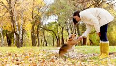Girl with dog best friend in autumnal park - stock footage