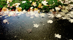 Merry rain dripping into a puddle of cold autumn Stock Footage
