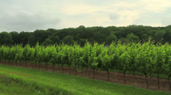 Vineyard Stock Footage