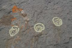 Close up of round patterns on the stones on Tibetan Plateau, Qinghai, China, - stock photo
