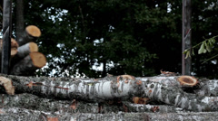 498 loading and piling cut birch trees at the back Stock Footage
