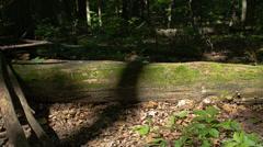 Morning sunlight streaming across moss covered log - time lapsed slider Stock Footage