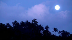 Full moon night in the jungle. Stock Footage
