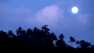 Stock Video Footage of Full moon night in the jungle.