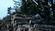 504 taking piles of trees and carrying it off lifting of set of logs Stock Footage