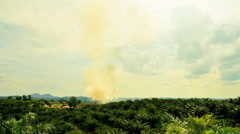 Palm Oil Factory Stock Footage