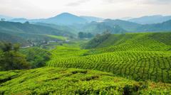 Morning at Sg Palas Tea Plantation Stock Footage