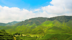 Day light Tea Plantation Stock Footage