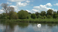 River Avon / Beautifull landscape with swan / England, United Kindom Stock Footage
