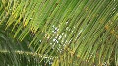 Rarotonga cook  islands 02 Stock Footage