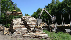 Man load felled trees logs with crane to trailer transportation Stock Footage