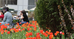 Ultra HD 4K Tulips, People enjoying spring day in One Bryant Park, New York City Stock Footage