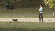 Stock Video Footage of Man walking dachsund along park path (2 of 2)