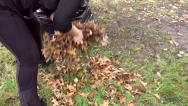 Stock Video Footage of Woman raking leaves 2